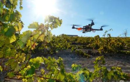 quadrotor flying vineyards